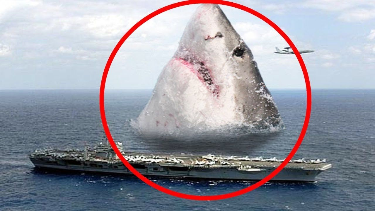 5 Real Megalodon Shark Caught On Tape Spotted In Real Life Https Youtu Be D0wioykzt S Megalodon Shark Megalodon Shark