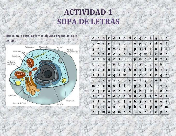 Resultado de imagen para actividades sobre la celula grado cuarto ...