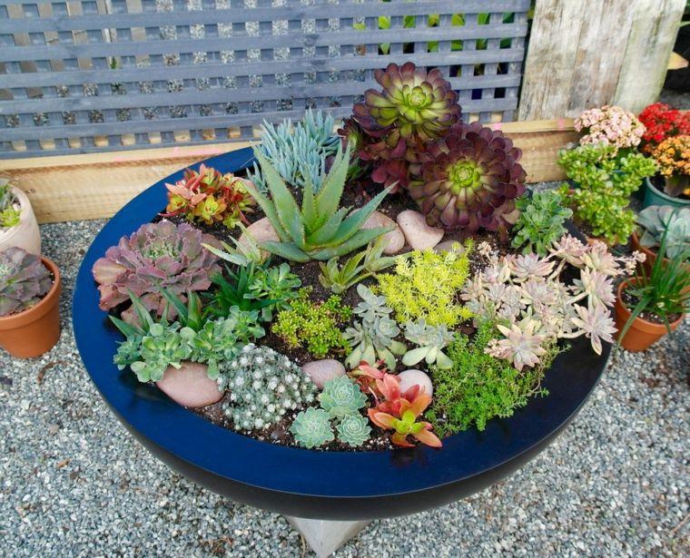 cactus en macetas para decorar | Deco -Cactus | Pinterest | Cacti ...