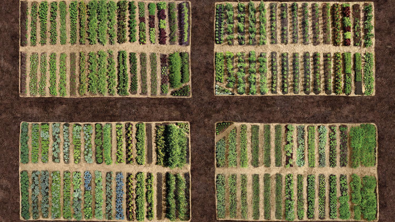 Gardening   Vegetable garden, Gardening tools and Lawn