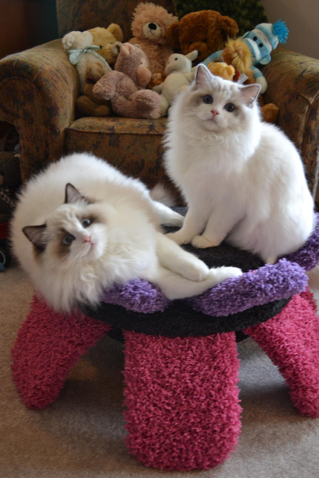 Pin By Patricia Gross On Animaux Cute Cats Cute Animals Cute Animal Pictures