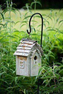 colivie de pasarele