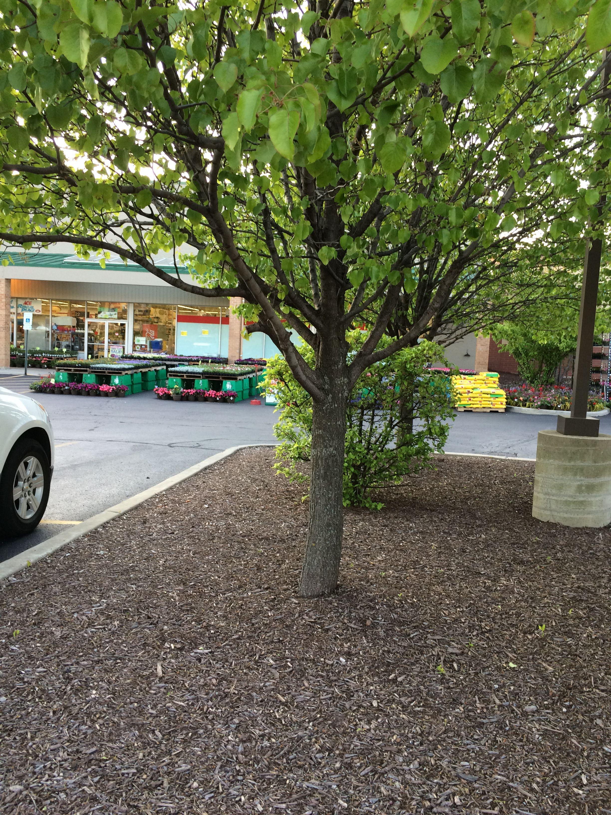 Park Art|My WordPress Blog_Forestry Mulching Contractors Near Me