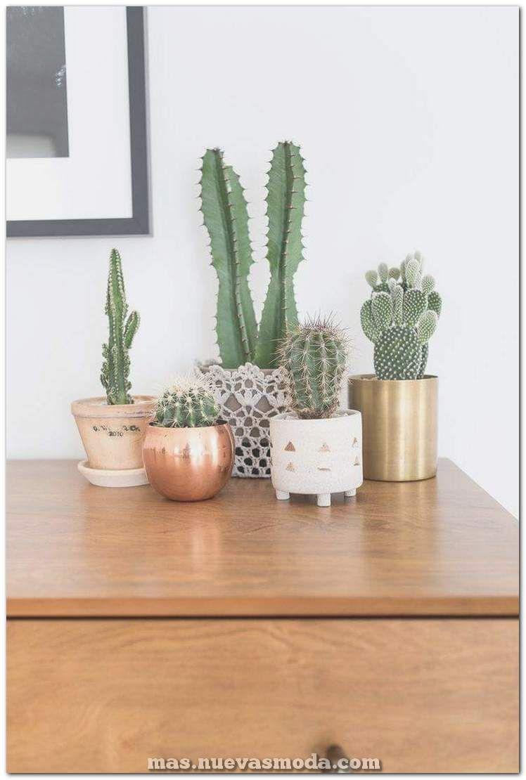 60 impresionantes ideas de decoración para el hogar suculentas para amplificar tu interior