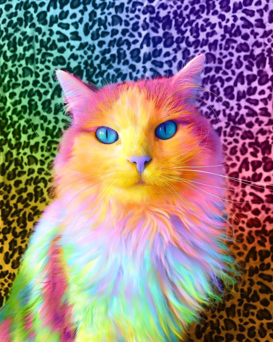 Colorful Cat Trippy Cat Cute Baby Animals Rainbow Cat
