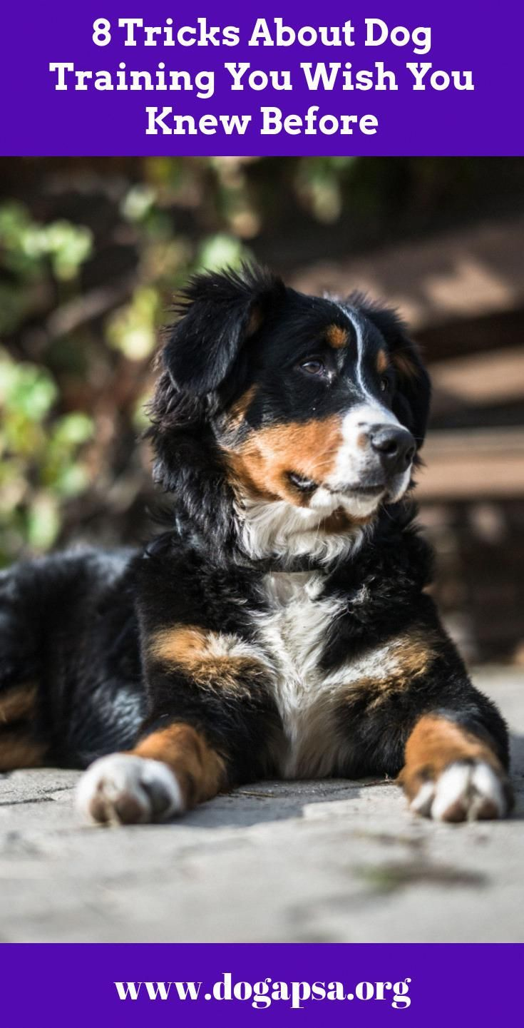 Required Help With Pet Dog Training Take Into Consideration These