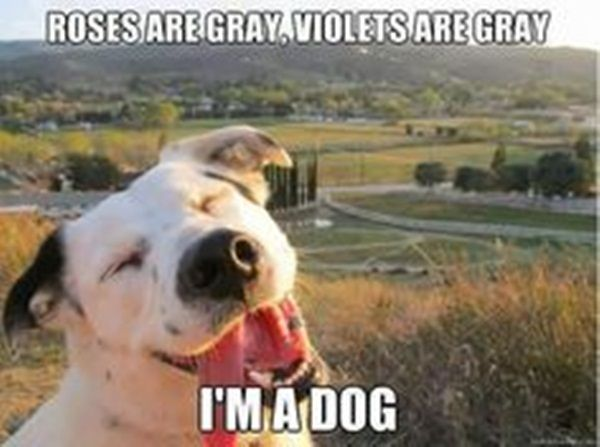 22 Short Funny Poems Make Your Day Happy Roses Are Red Funny