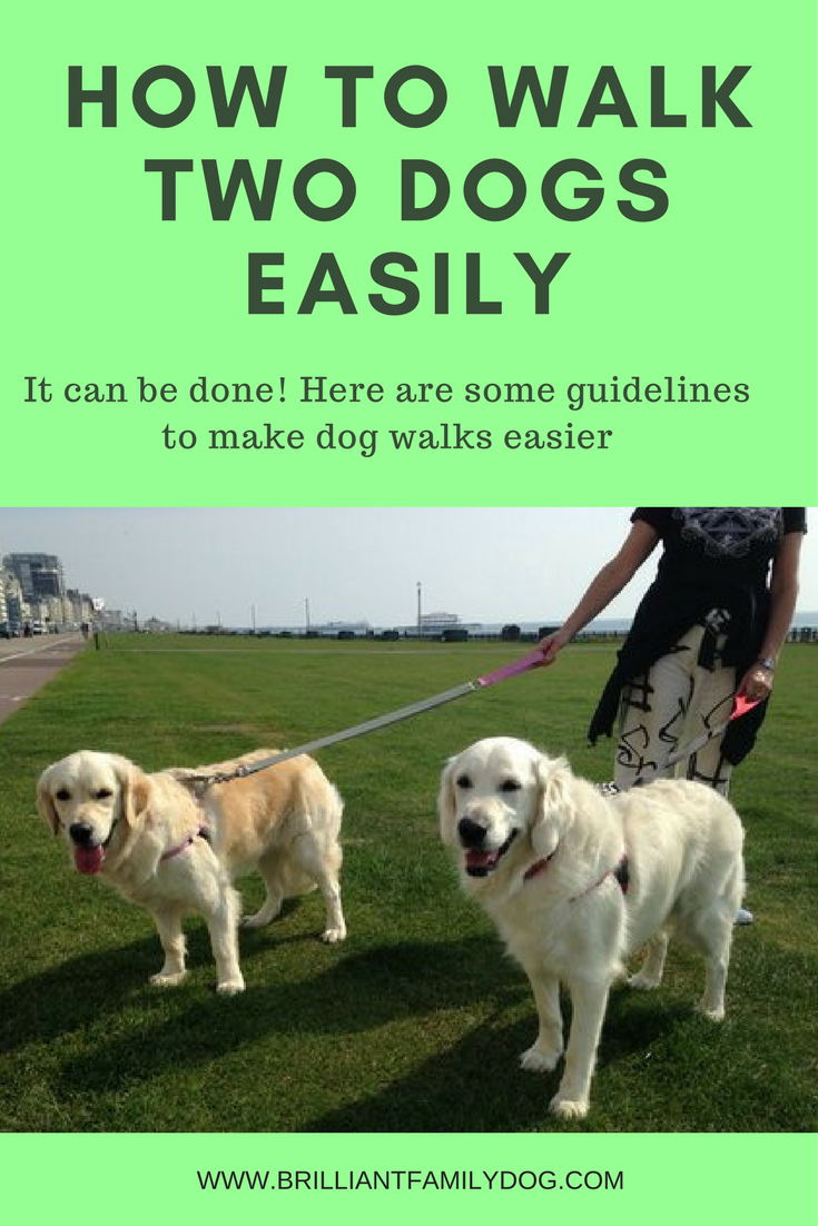 foto How to Walk Two Dogs at the Same Time on Leashes