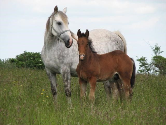 all-rounder, event horse, hunter, sports horse, youngstock and foals  71536 007