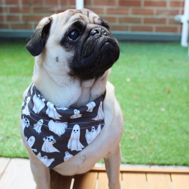 a58f673e Halloween Dog Bandana, Halloween Dog Costume, Dog Bandana, Ghost Bandana,  Dog Dress up, Dog Costume, Ghost Dog Outfit, Halloween Costume Pet by ...