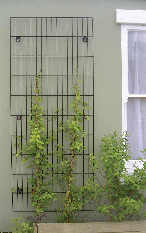 treillis pour plantes grimpantes projet bureaux ubisoft pinterest treillis fixation et. Black Bedroom Furniture Sets. Home Design Ideas