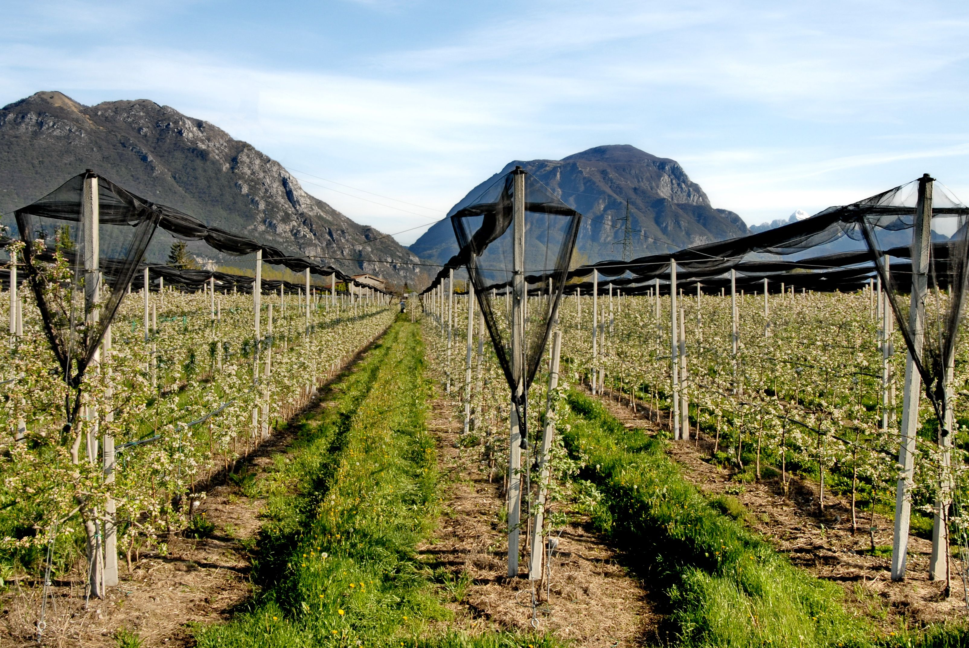 Una panoramica dell' azienda, racchiusa dalla culla geografica delle montagne di Gemona del Friuli