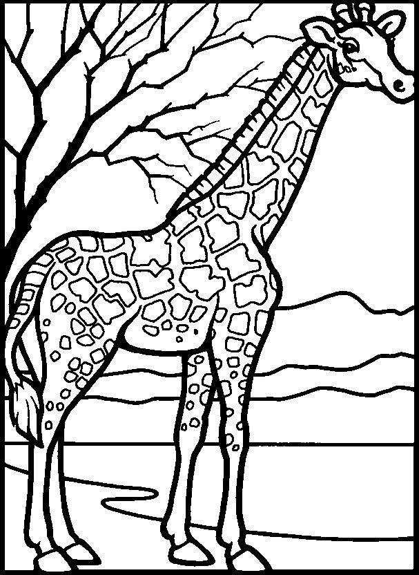 Giraffe Malvorlagen Kostenlos 1040 Malvorlage Giraffe Ausmalbilder ...