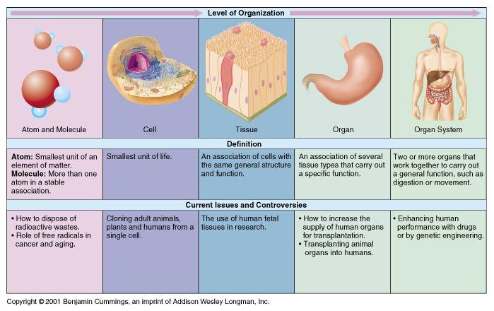 Bio Chem Physio Stuff