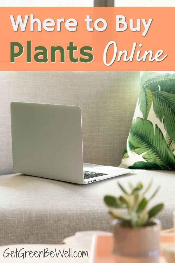 Best Place To Buy Indoor Plants Online It Might Surprise 400 x 300