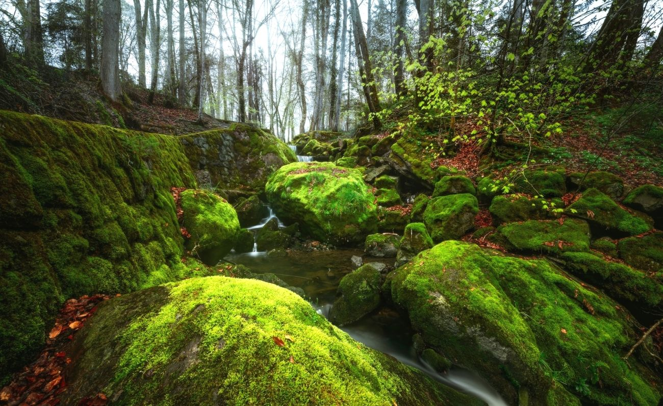 Download Nature Forest Trees Small River Creek Rock Stones Moss Landscape High Quality Hd Wallpaper High Quality Hd Wallpaper In 2k 4k 5k 8k 10k Resolution For