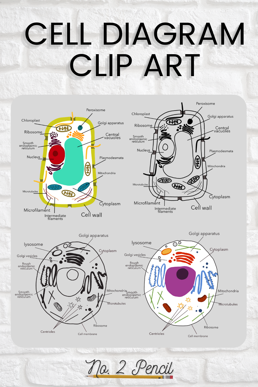 Animal And Plant Cell Clip Art In 2021 Classroom Clipart Clip Art Custom Drawing [ 1500 x 1000 Pixel ]