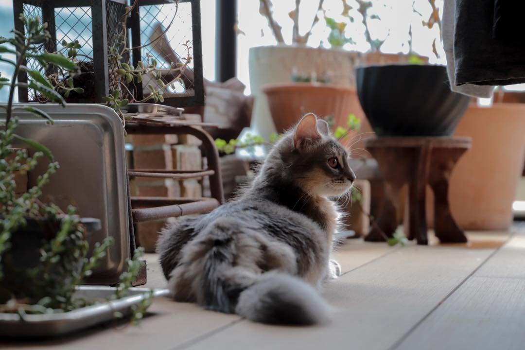 早朝の仕事を終わらせて これからココちゃんと病院行って来ます I M Going To The Hospital With Coco Now Cat Somali Cats Animals
