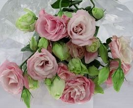 Mariachi pink lisianthus flowers and fillers flowers by mariachi pink lisianthus flowers and fillers flowers by category sierra flower finder mightylinksfo