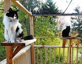 Catio = cat patio, enclosed and accessible from the house so cats can wander in and out as they please..Chora would like this..