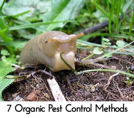 7 Organic Pest Control Methods