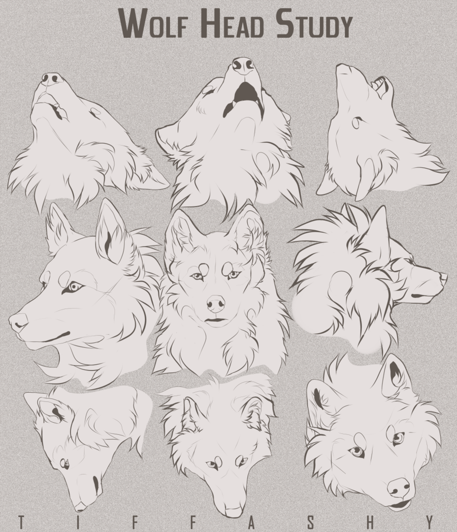 Wolf Head Study/Tutorial by TIFFASHY | Tuto | Pinterest