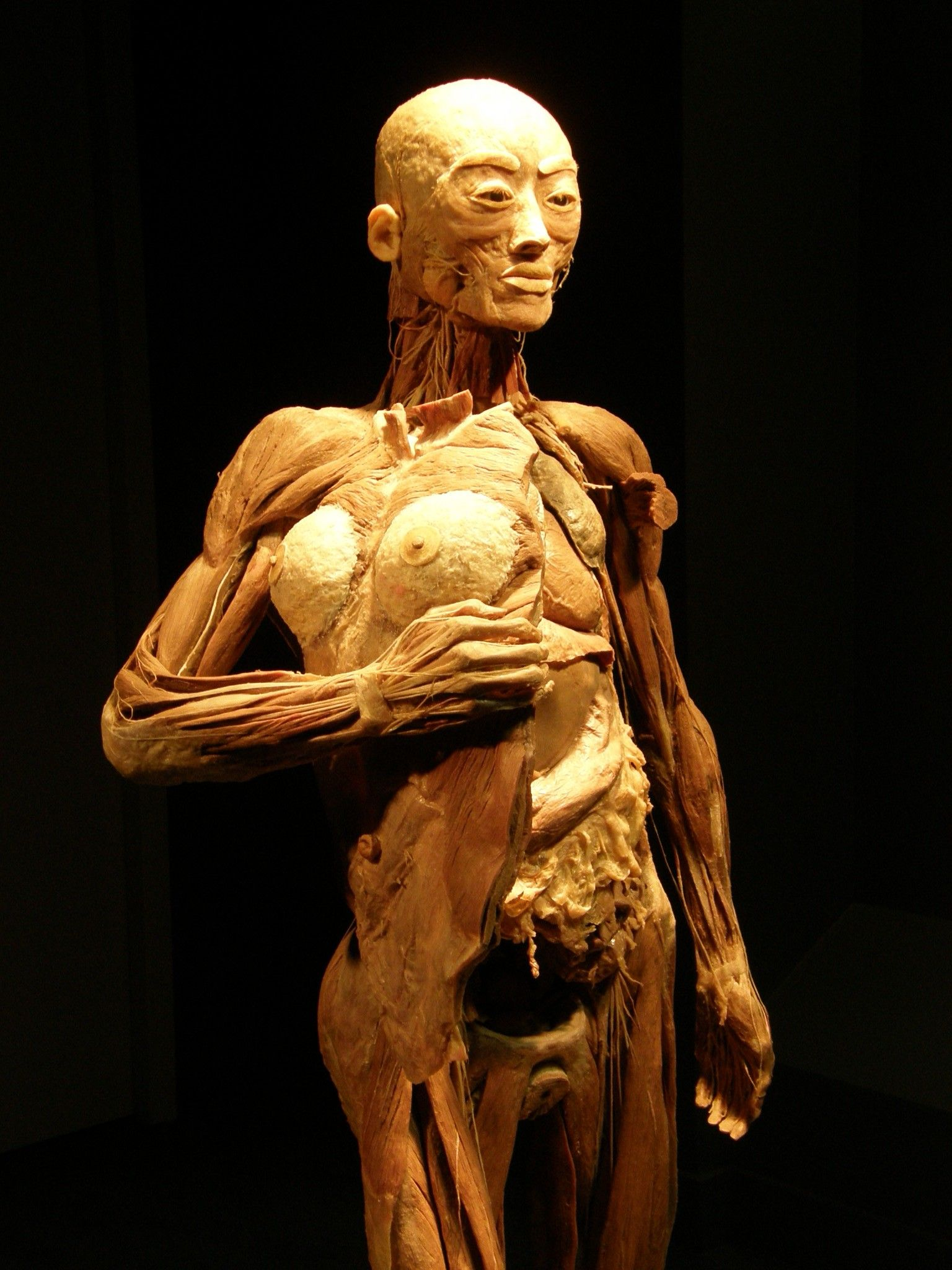 The Intricacies Of The Human Body Using Genuine Human Tissues