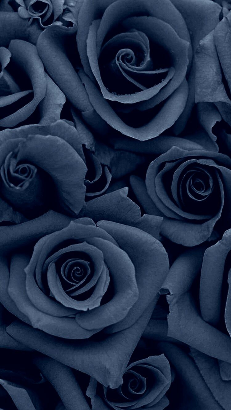 Denim Colored Rose Galaxy Backgrounds In 2019 Wallpaper Rose