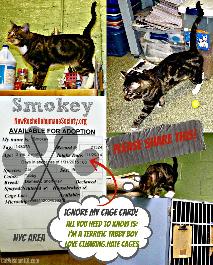 Bulls Eye On Shelter Adoption Success Cats Adoption Cats Kittens