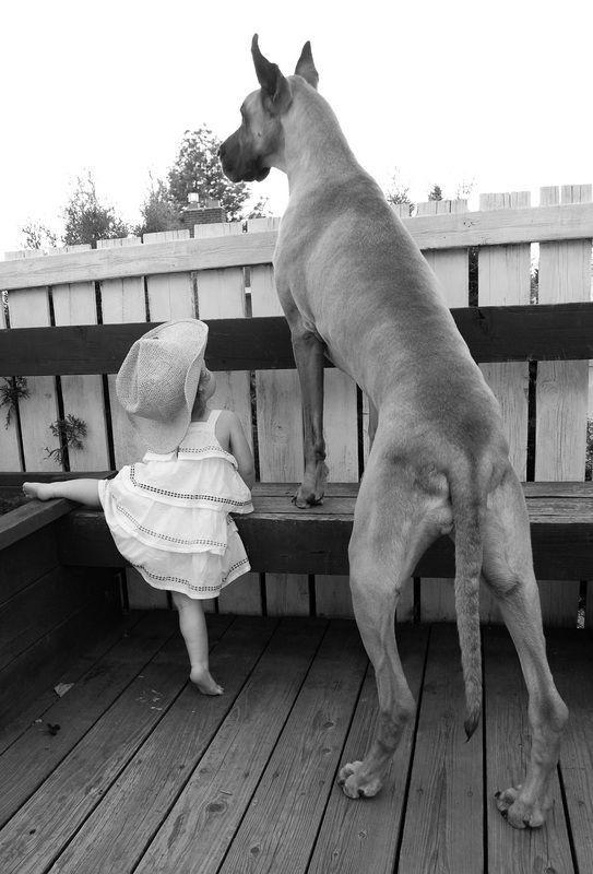 Little Girl teaching 'Ballet' to her Big Puppy.