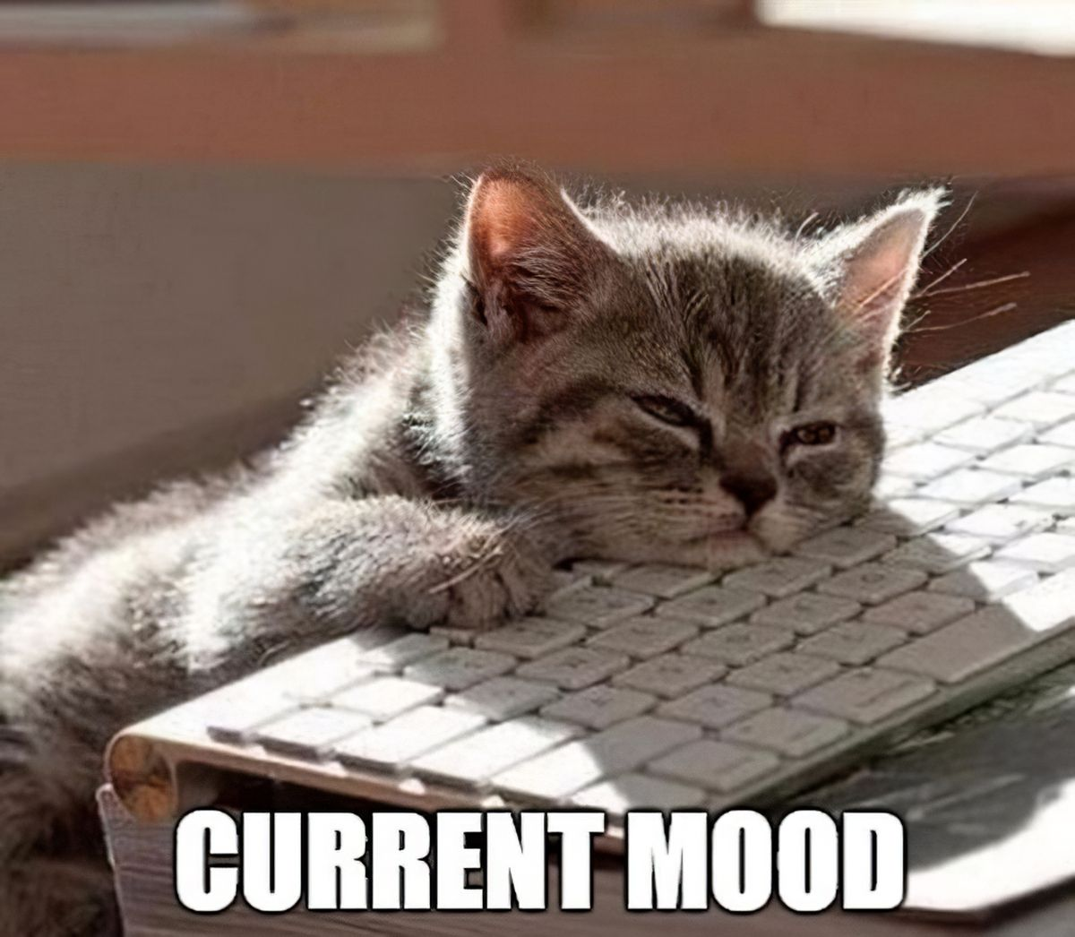 Current mood! Tired Quotes Exhausted, Exhausted Humor, Sleepy ...