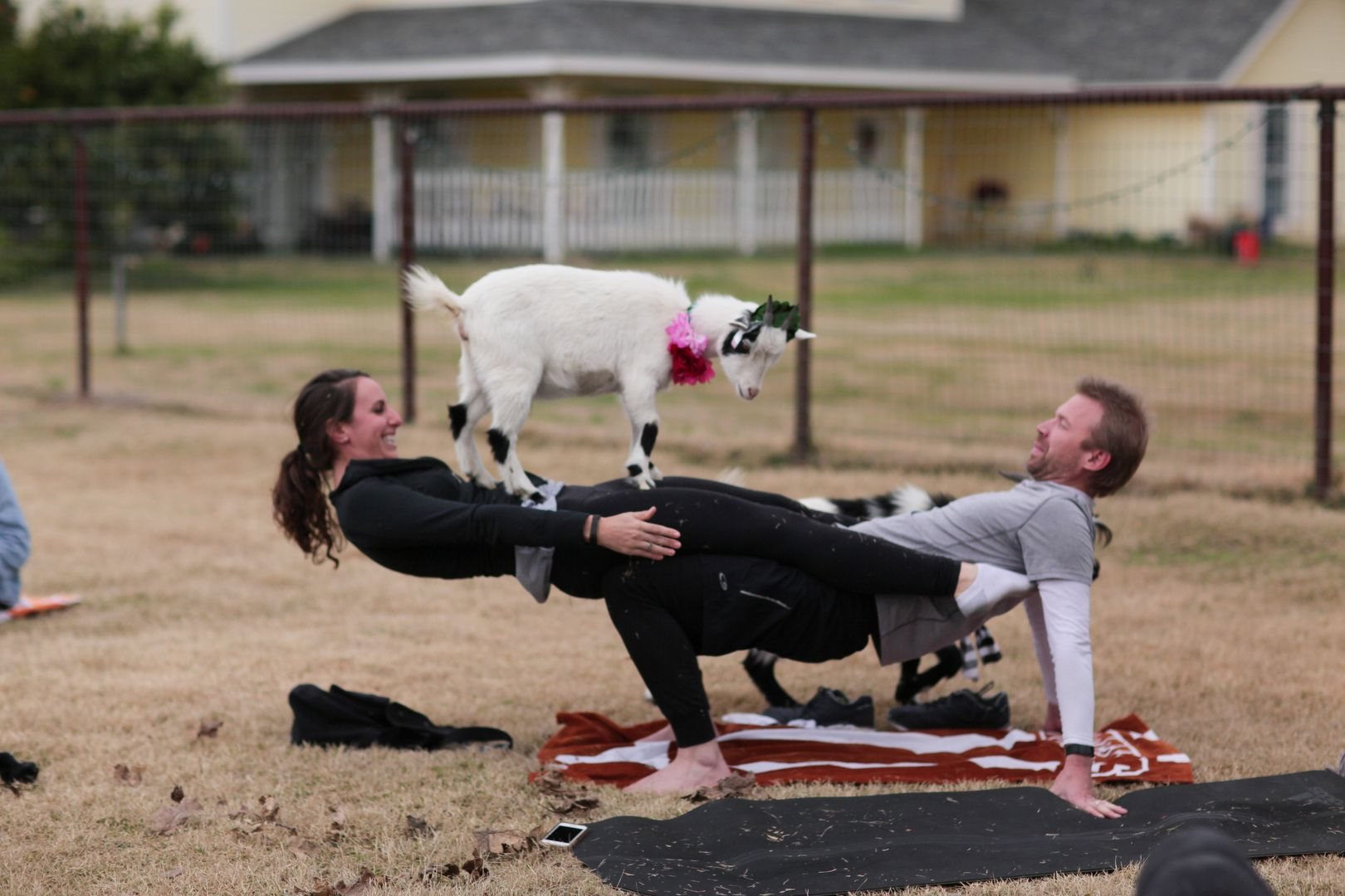 Home Of Goat Yoga In Arizona Goat Yoga Restorative Yoga Yoga Sequence For Beginners