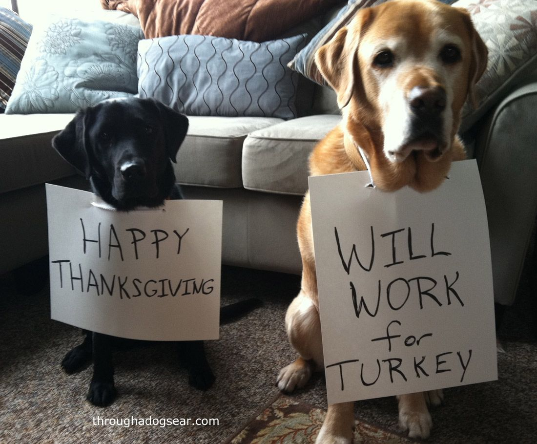 Thanksgiving Food Safety For Dogs Dog thanksgiving