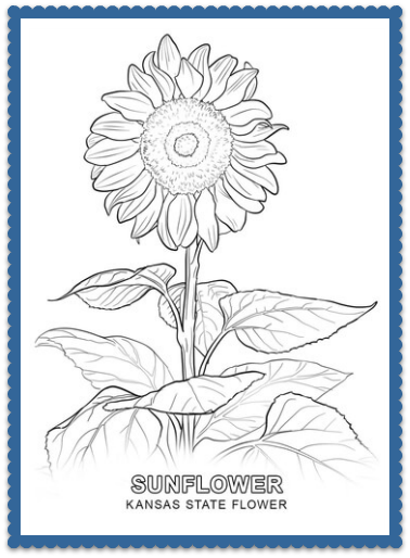 Kansas State Flower Sunflower By Usa Facts For Kids Sunflower Coloring Pages Flower Coloring Pages Sunflower Colors