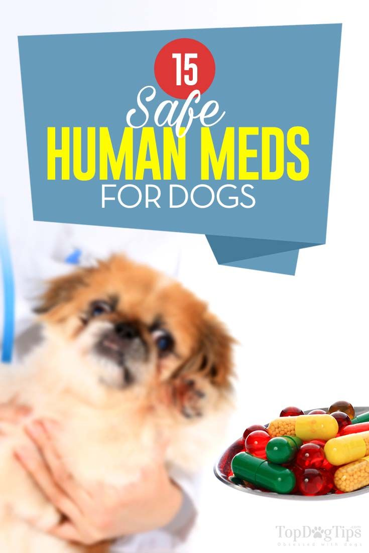 15 Safe Human Medications for Dogs Medication for dogs