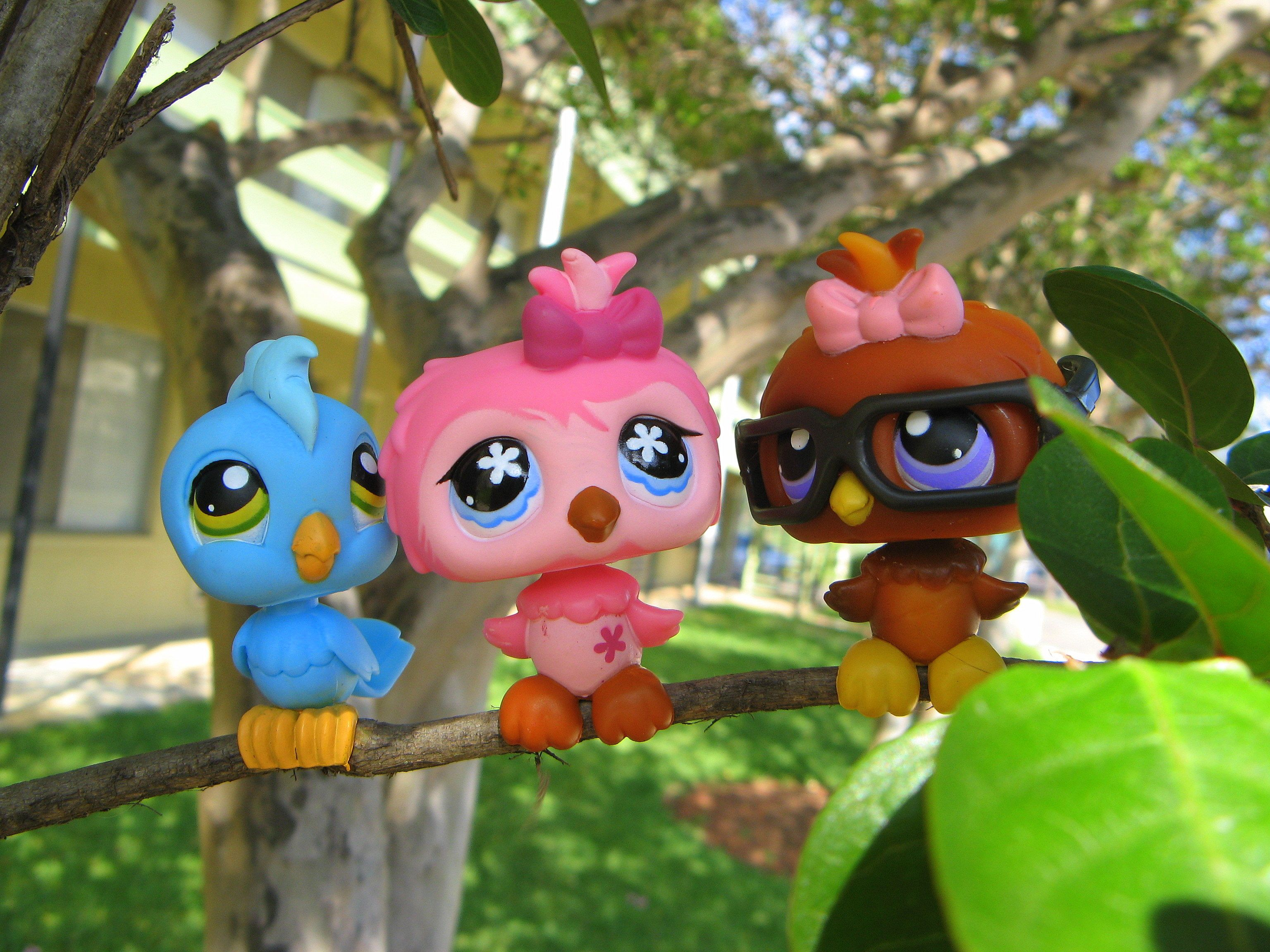 LPS Birds omg love the one with glasses Little pet shop