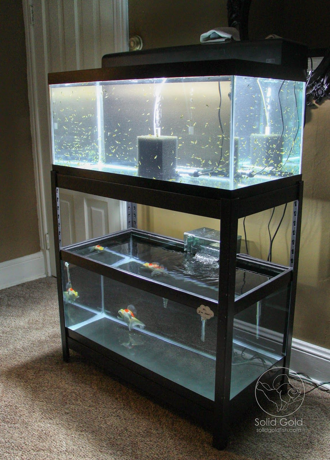 Fish tank in the floor - I Found This Shelving Unit From Lowe S That Fits Two 40 Gallon Breeder Tanks Perfectly This Means No More Tanks On The Floor Of My D