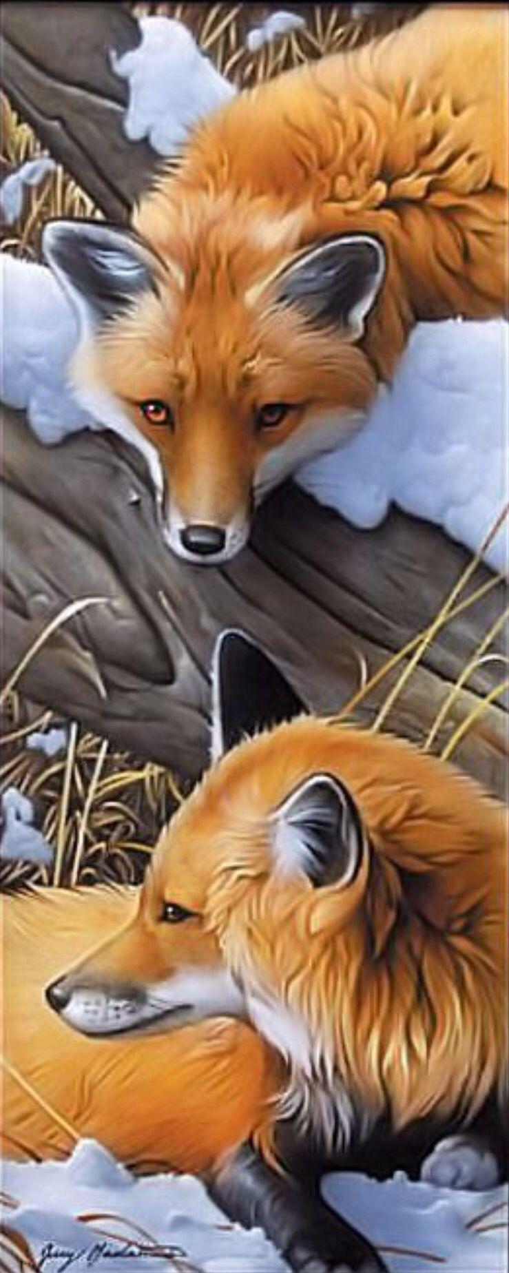 Jerry gadamus foxes in 2019 peintre animalier peinture dessin renard - Dessin renard ...