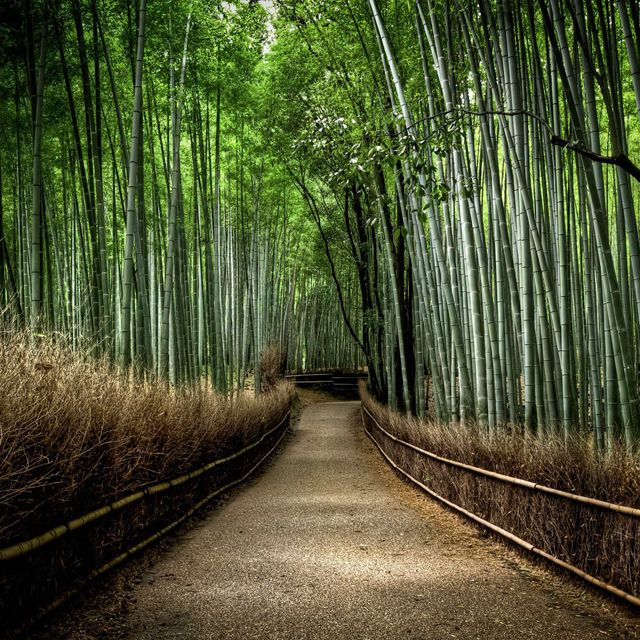 Sagano Bamboo Grove, Japan <3