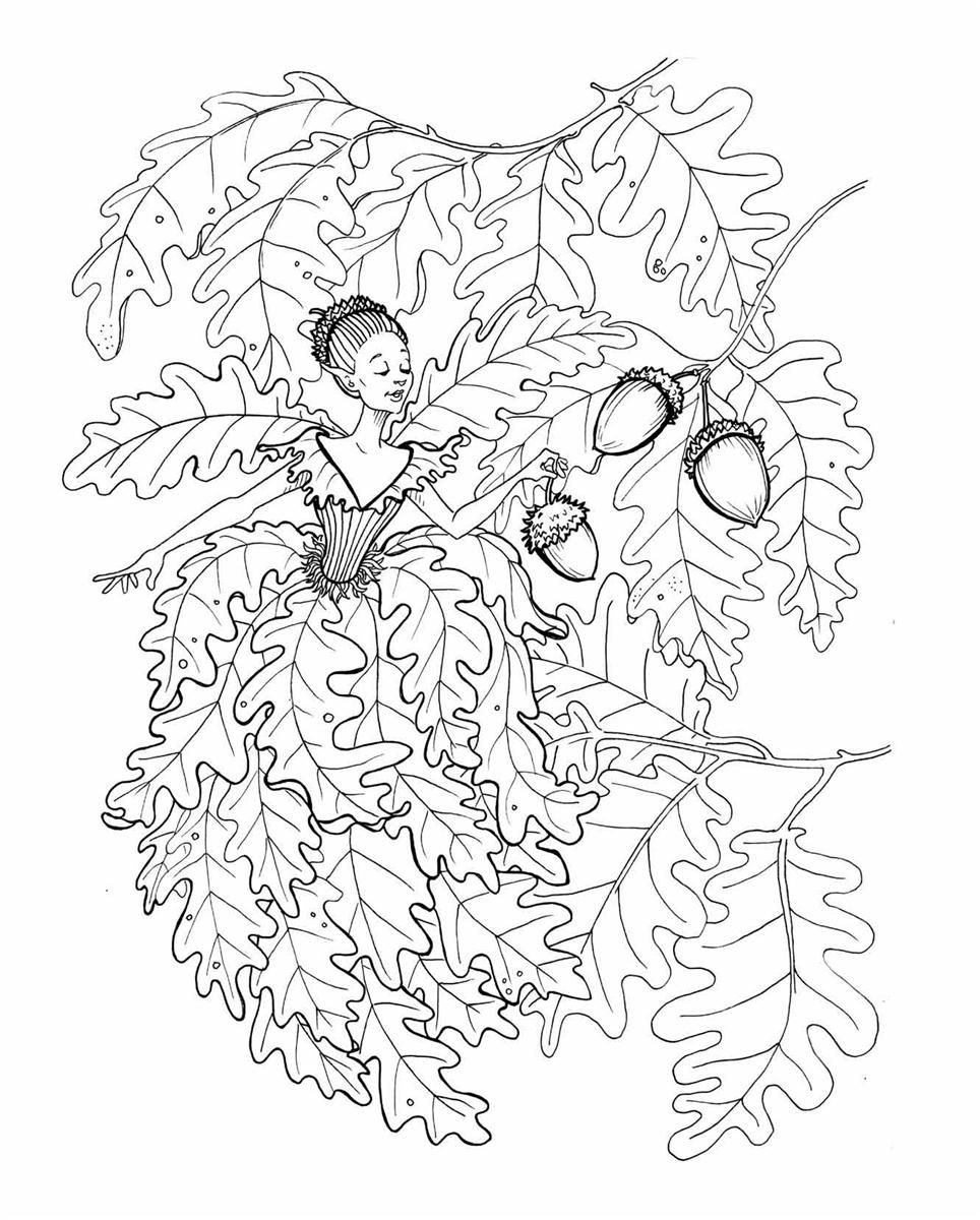 Fairies Colouring Book Kleurplaten Afbeeldingen