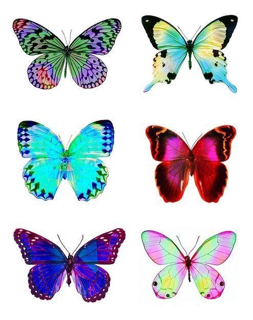 butterflies digital collage sheet | dhatree | Pinterest | Tempel und ...