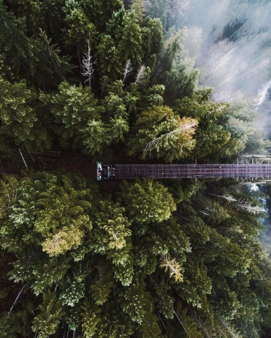 Nature And Landscape Pictures Tumblr Blog Vance Creek BridgeDrone PhotographyPhotography