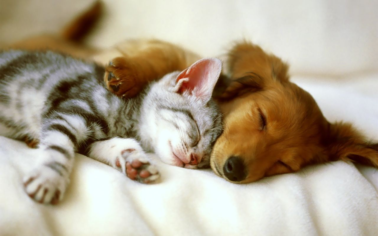 Ark Animal Blog The Incredible Power Of Tender Companionship Dogs Hugging Kittens And Puppies Animals Friendship