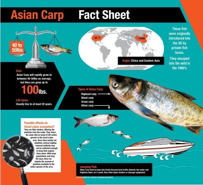 Asian carp pet food — img 14