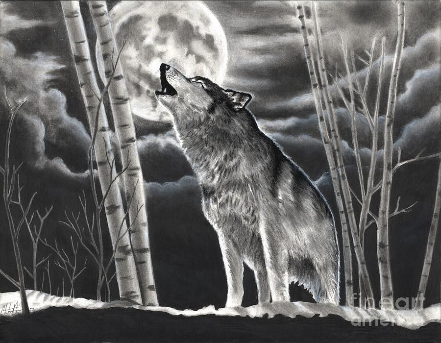 Black Wolf Howling Drawing Realistic Charc...