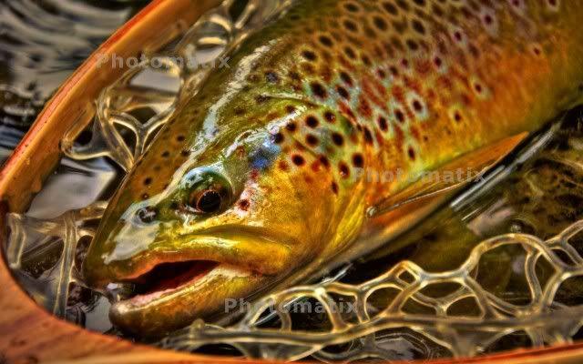 Pin By Big Jake Blitzbiker On Fly Fishing