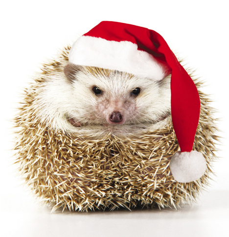 50 Great Charity Christmas Cards Hedgehog Pet Charity Christmas Cards Christmas Animals