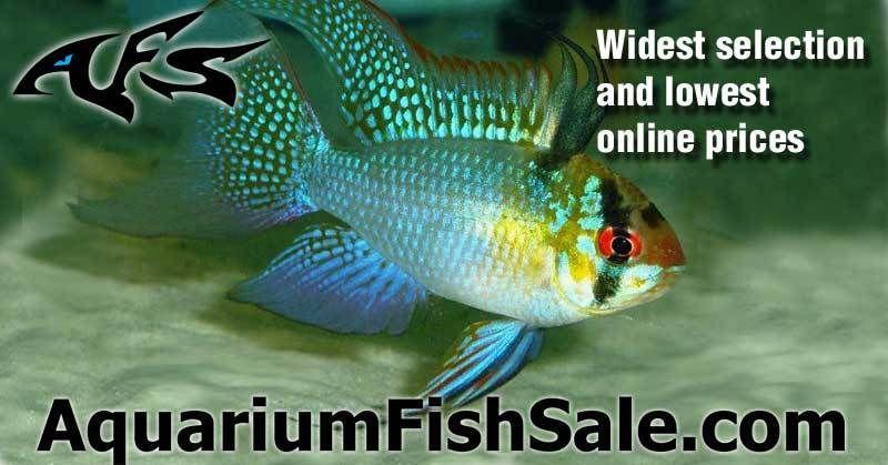 Aquarium tropical fish for sale best prices on rare