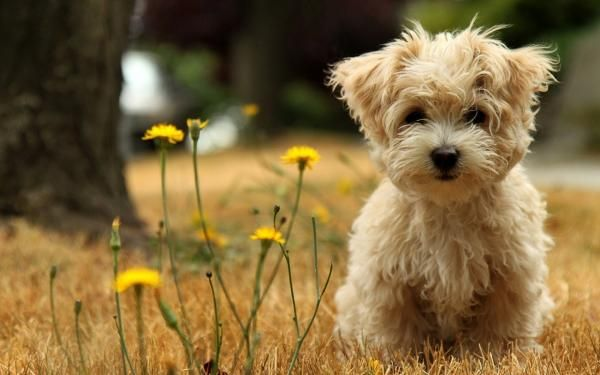 Nature Flower Cute Animals Dogs Funny Puppy Sweet Wallpaper Susseste Haustiere Tiere Und Hunde Tapete