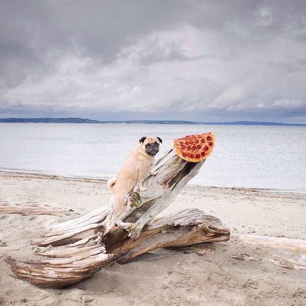 """Pizza in the Wild"" series Image credit: Jonpaul Douglass"